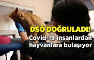 DSÖ doğruladı! Covid-19 insanlardan hayvanlara...