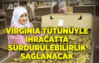 Virginia tütünüyle ihracatta sürdürülebilirlik...