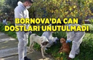 Bornova Belediyesi tam kapanmada can dostlarını...
