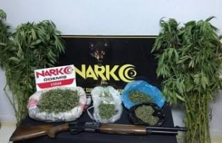 Ödemiş'te uyuşturucu operasyonu, 1 gözaltı