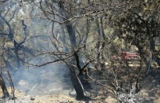 Datça'da çıkan orman yangınında 1 hektarlık...