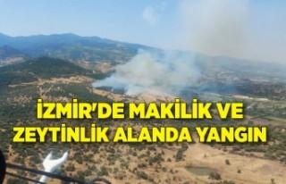 İzmir'de makilik ve zeytinlik alanda yangın