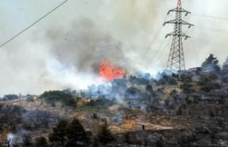 Kocaeli'de 30 dönüm ormanlık alan yandı