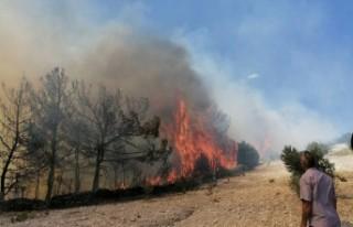 Kula'da zamanında müdahale, orman yangınının...