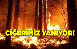 Yangın haberlerinde son durum ne?
