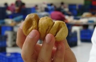 Aydın'da kuraklık kuru inciri de vurdu