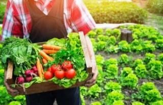 Organik ürün pazarı pandemide yüzde 12 büyüdü