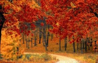 Sonbaharda alerji belirtileri neden artar ?