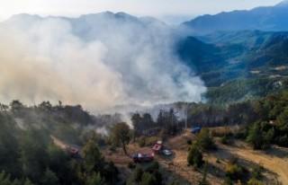 Orman yangını, Göynük Kanyonu'na ilerliyor