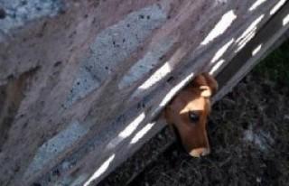 Başı Bahçe Duvarında Sıkışan Köpeği İtfaiye...