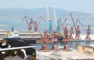 5 bin dana Bandırma Limanı'nda