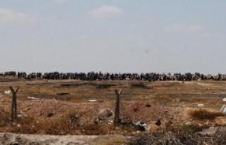 Akçakale Sınırına Bin Suriyeli Daha Geldi