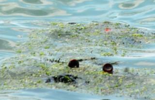 Karadeniz'de Kirlilik Alarmı