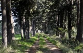 Papatya Cenneti Antalya'da Bahar