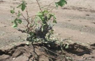 Sel Ve Dolu,Çiftçiyi Vurdu
