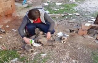 Yavru Köpeklere Liseli Muharrem Sahip Çıktı