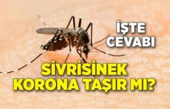 Sivrisinek corona taşır mı?