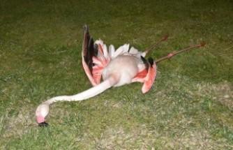 9 flamingo, 'travmatik etkenlerle oluşan iç kanama'dan ölmüş