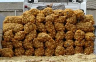 Üreticilerden patates ve kuru soğan alımına başlandı