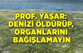 Prof. Yaşar: Denizi öldürüp, organlarını bağışlamayın