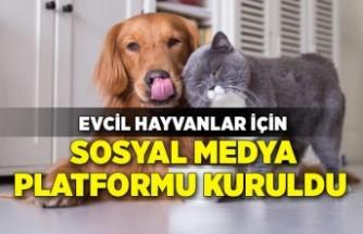 Evcil hayvanlar için sosyal medya platformu kuruldu