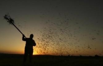 Tarım üreticilerine 600 milyon liralık faizsiz kredi verildi