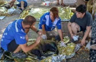 Manavgat'ta hayvanlar için Türkiye'nin ilk sahra hastanesi