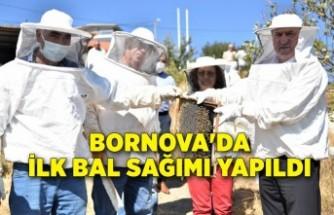Bornova'da ilk bal sağımı yapıldı