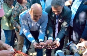 Beydağ Çomaklar'da Kestane Festivali