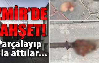 İzmir'deki Vahşetin Görüntüleri Kan Dondurdu
