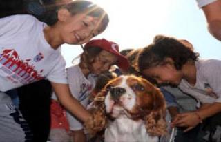 'En Güzel Köpek' Yarışması