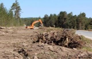 Ağaçlar Yola Kurban Edildi