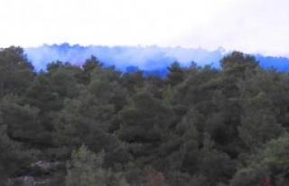 Bigadiç'te Ormanlık Alanda Yangın Çıktı