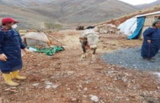 Çelikhan'da, Kuduz Karantinası
