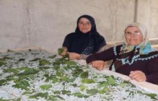 Devlet Destek Oldu, 2 Ev Kadını İpek Böceği Yetiştirmeye...