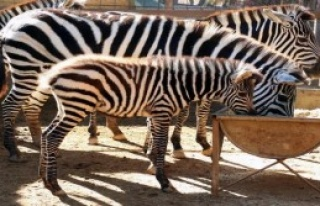 Hayvanat Bahçesinin Yeni Maskotları