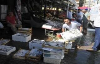 İlk Balık Tezgaha Pahalı Düştü