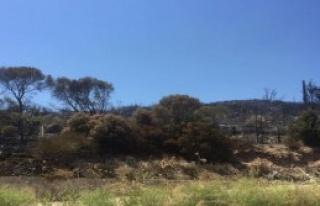 Sisam'da Yangın