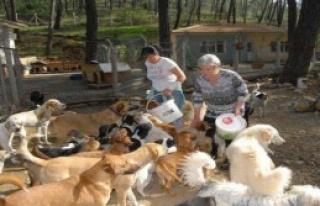 Sokak Hayvanları, Koruyucusunu Kaybetti